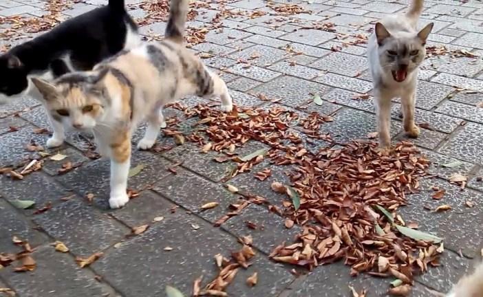 公園で近づいてくる猫