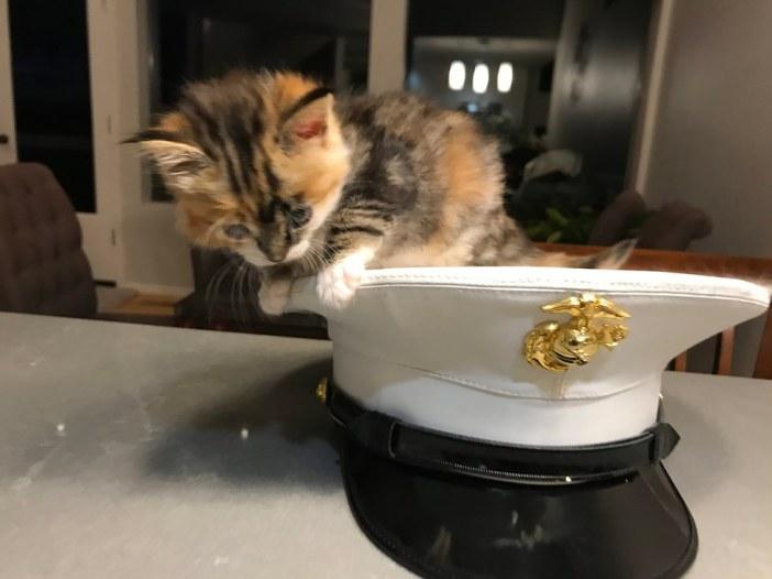 帽子と子猫