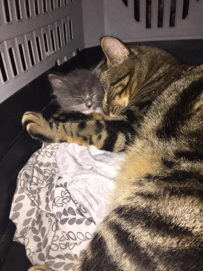 くっつく猫と子猫