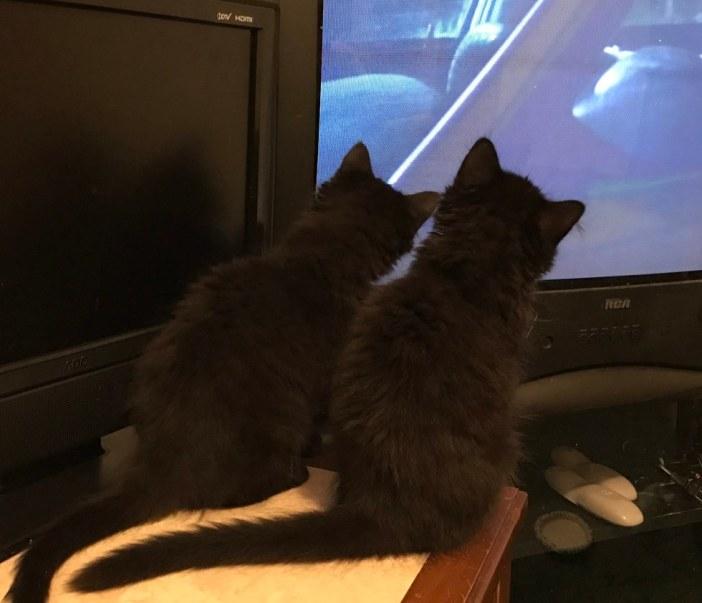 テレビを見る子猫