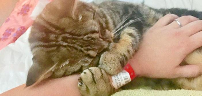 手を抱きしめる猫