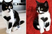 ハートマークのある子猫