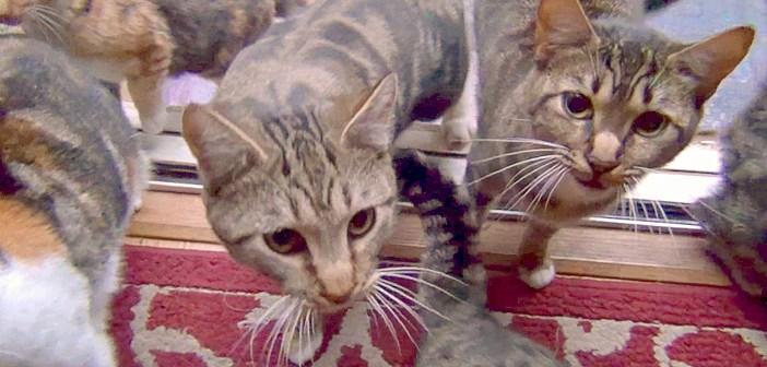 家の外で待つ猫達