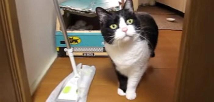 どけて欲しい猫