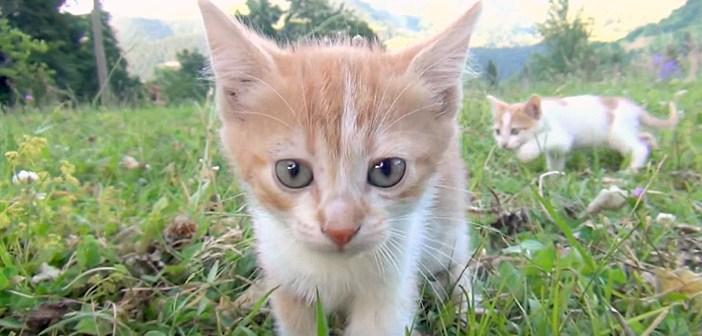 草原の中で遊ぶ子猫
