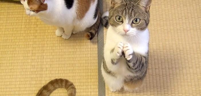 おやつをおねだりする猫