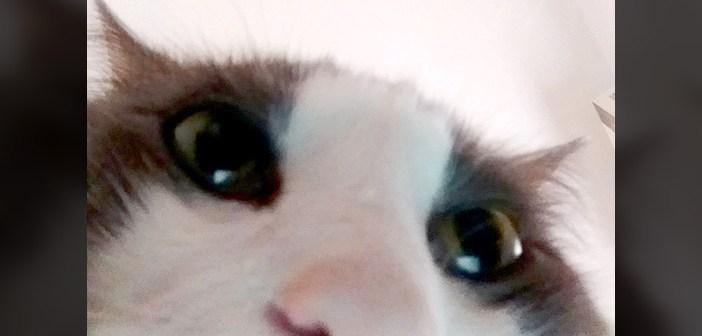 自撮り写真猫