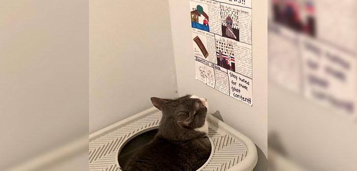 トイレで新聞を読む猫