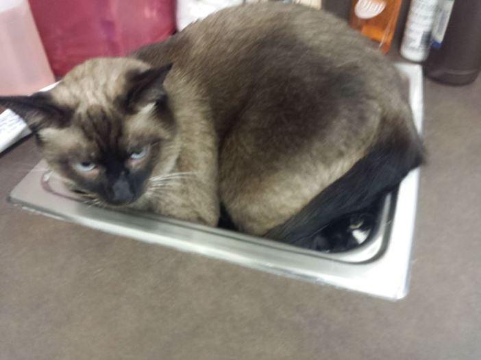 ぎゅうぎゅうの猫
