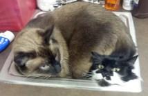 動物病院に行った猫達