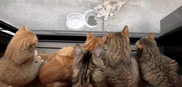 子猫を見る猫達