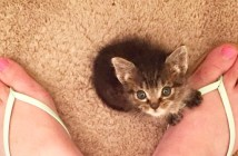 足にくっつく子猫