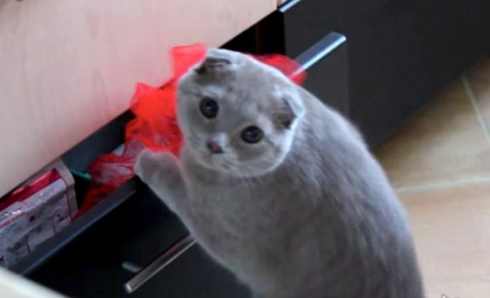 気づいた猫