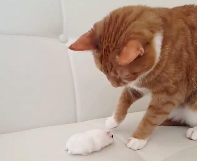 ネズミに追い詰められる猫