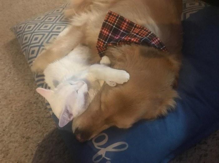 一緒に眠る犬と子猫