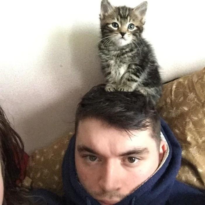 頭に乗る子猫