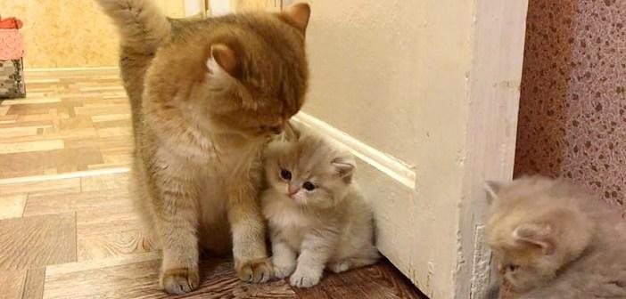 お母さんに寄り添う子猫
