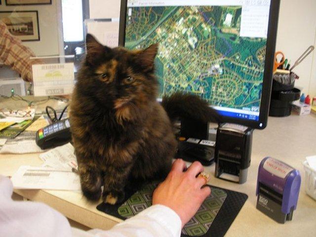 机に座る猫