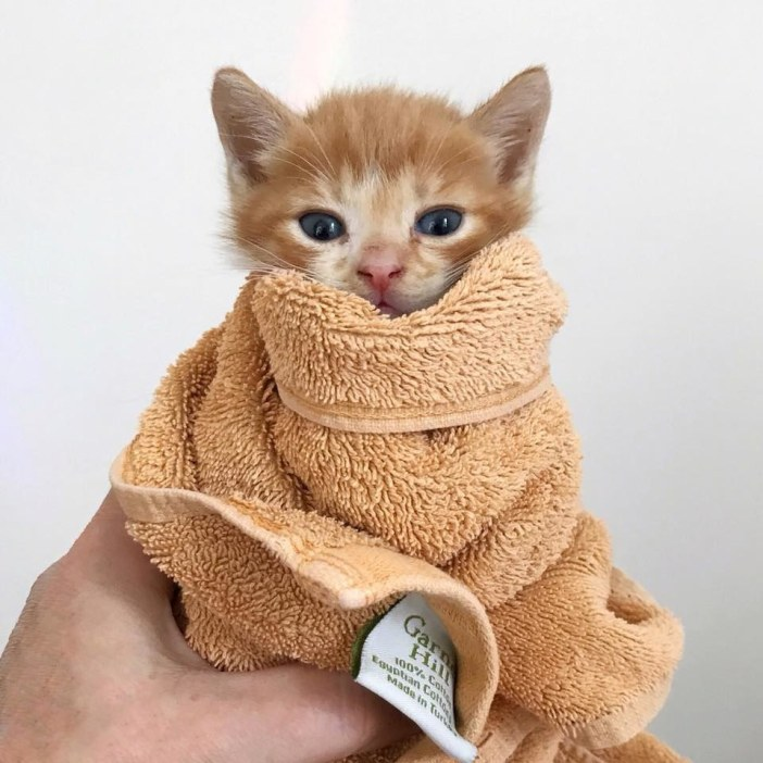 包まれる子猫