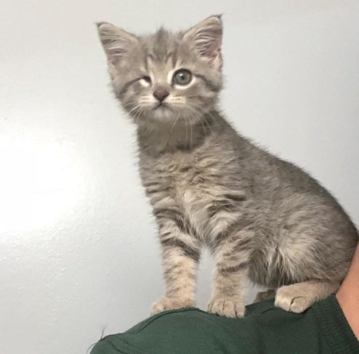 肩の上の子猫