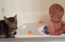 赤ちゃんが大好きな子猫