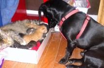 子猫の面倒を見る犬