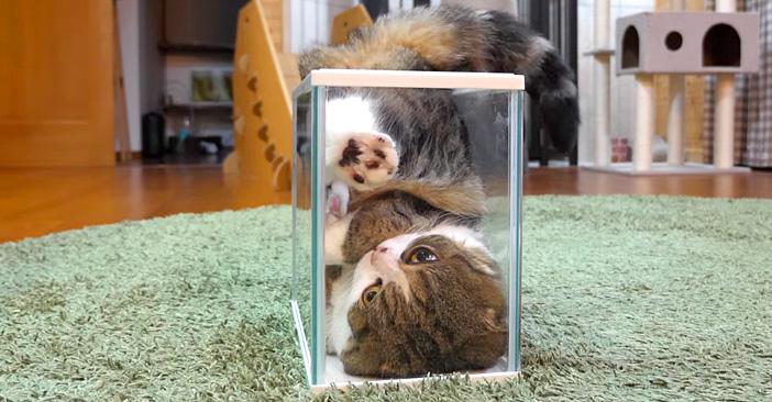 フィット感を追求する猫