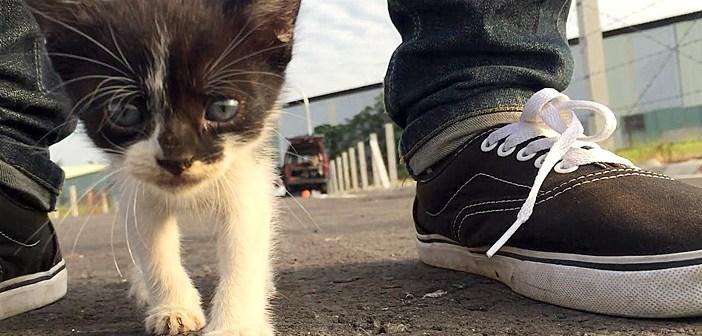 ついてくる子猫