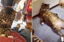 お店に来た猫