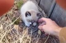 幼い子猫を保護