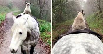 仲良しな馬と猫