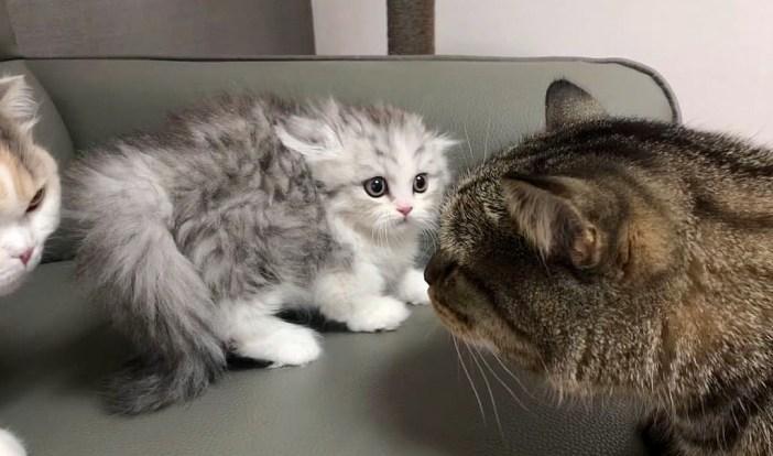 カチコチ猫