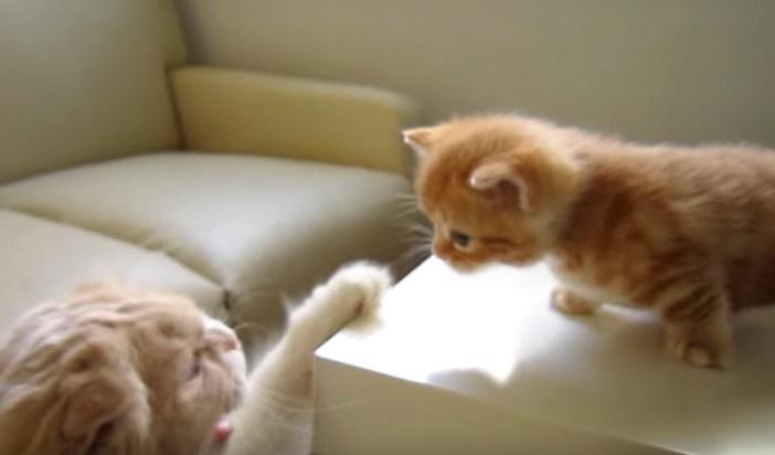 叱られる子猫