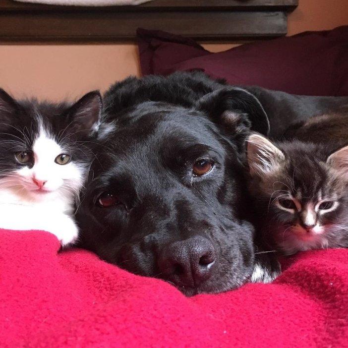くつろぐ犬と子猫