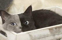2つの顔を持つ猫