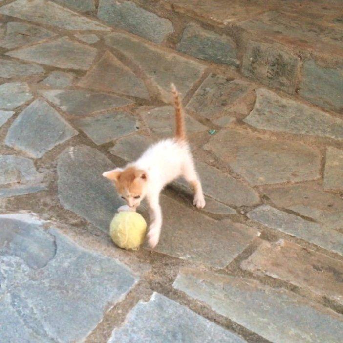 ボール子猫