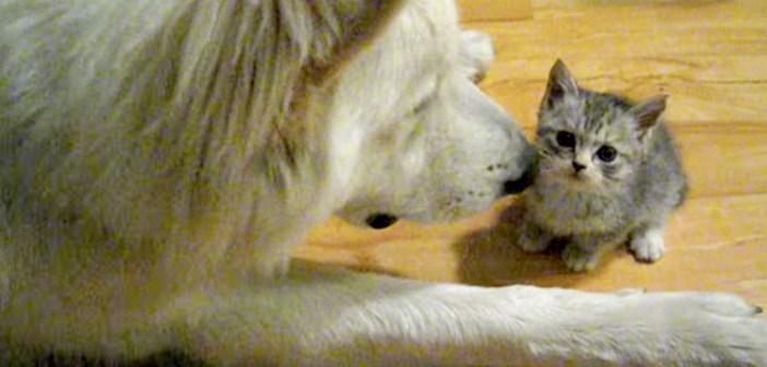 接近する犬と子猫