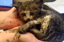 ドロの中から救い出された子猫