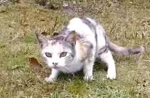 身構える野良猫