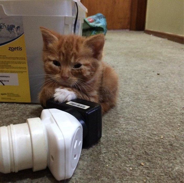 温まる子猫