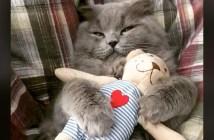 ぬいぐるみ好きの猫