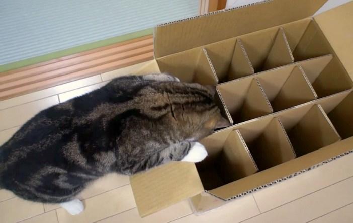ダンボールに入りたい猫