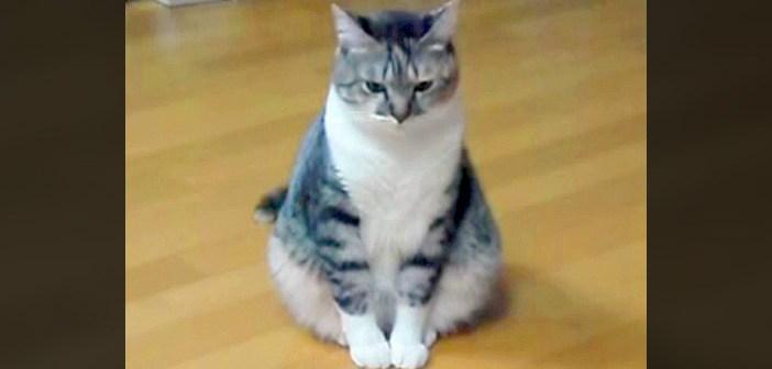 反省中の猫