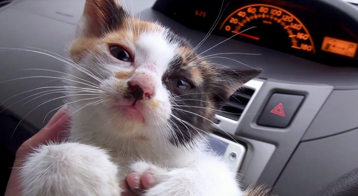 温められる子猫