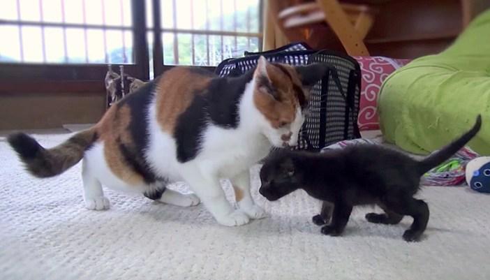 三毛猫と子猫