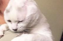 耳のない猫