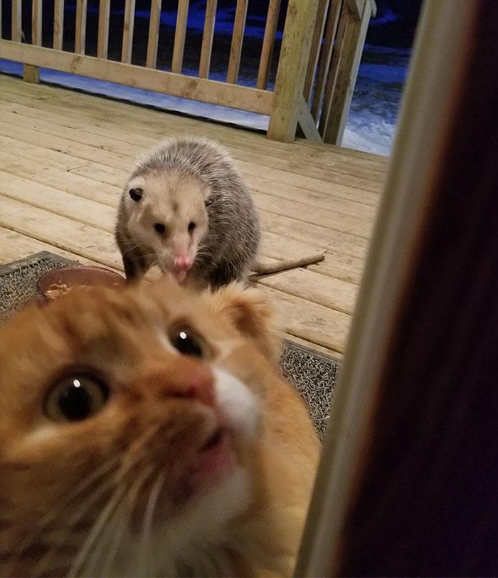 何かを伝える猫