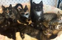 9匹の子猫