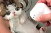 シャワーでとろける子猫