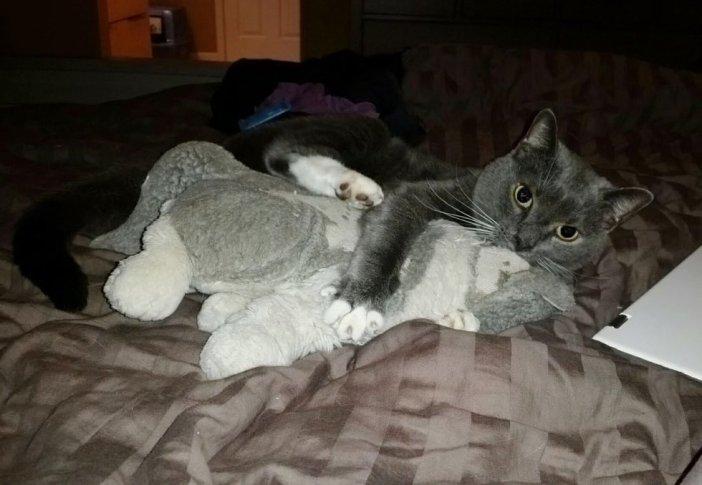 ぬいぐるみを抱きしめる猫